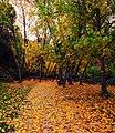 Autumn At Pou Clar (20941261).jpeg