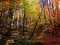 Autumn Belgrad Forest 5.jpg