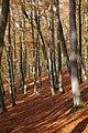 Autumn Colour - geograph.org.uk - 604499.jpg