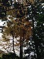 Autumn Leaves in Ryoanji Temple 4.jpg