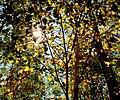 Autumn Sunlight (244484308).jpg