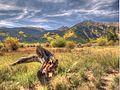 Autumn in Colorado (6176740082).jpg