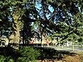 Bürkliplatz - Cedrus libani 2012-03-21 16-27-20 (P7000).JPG
