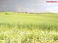 Başmelu 2011 - panoramio.jpg