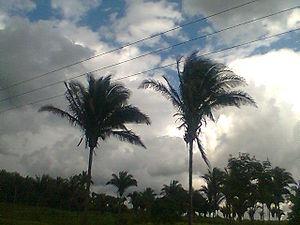 Babassu oil - Babassu palms in Maranhão, Brazil
