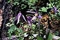 Badlands Flowers- Red, Pink, Blue (b02c28b0-2e93-49cf-9fd8-138dee365d0d).jpg