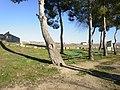 Bajo los pinos - panoramio.jpg