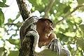 Bako National Park, Kuching, Malaysia (Unsplash).jpg