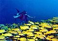 Banana Reef.jpg