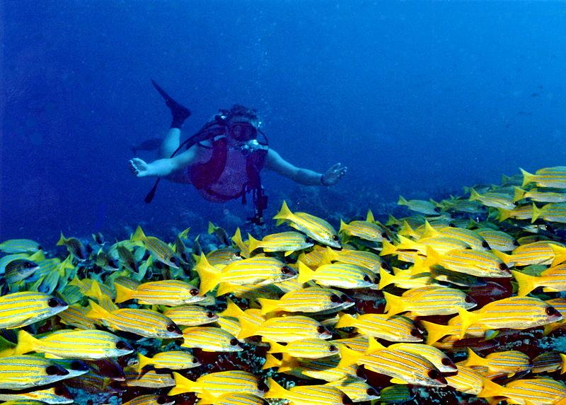 plongée en Asie