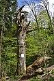 Bannwald im Naturschutzgebiet Untereck, Baden-Württemberg (2019).jpg