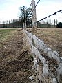 Barbed wire fence - geograph.org.uk - 1154423.jpg