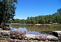 "Bastrop State Park Lake is surrounded by the ""Lost Pines of Texas"" and is prime breeding ground for the Houston toad."