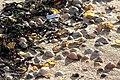 Beach closeups (33155843790).jpg