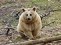 Bear (2379584257).jpg