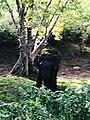 Beauty of the nature Elephant Kandalama Sri lanka 3.jpg