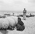 Bedoeïnen met hun schapen, Bestanddeelnr 255-6072.jpg