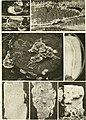 Beitrge zur Biologie der Pflanzen (1870-2006) (20336531086).jpg