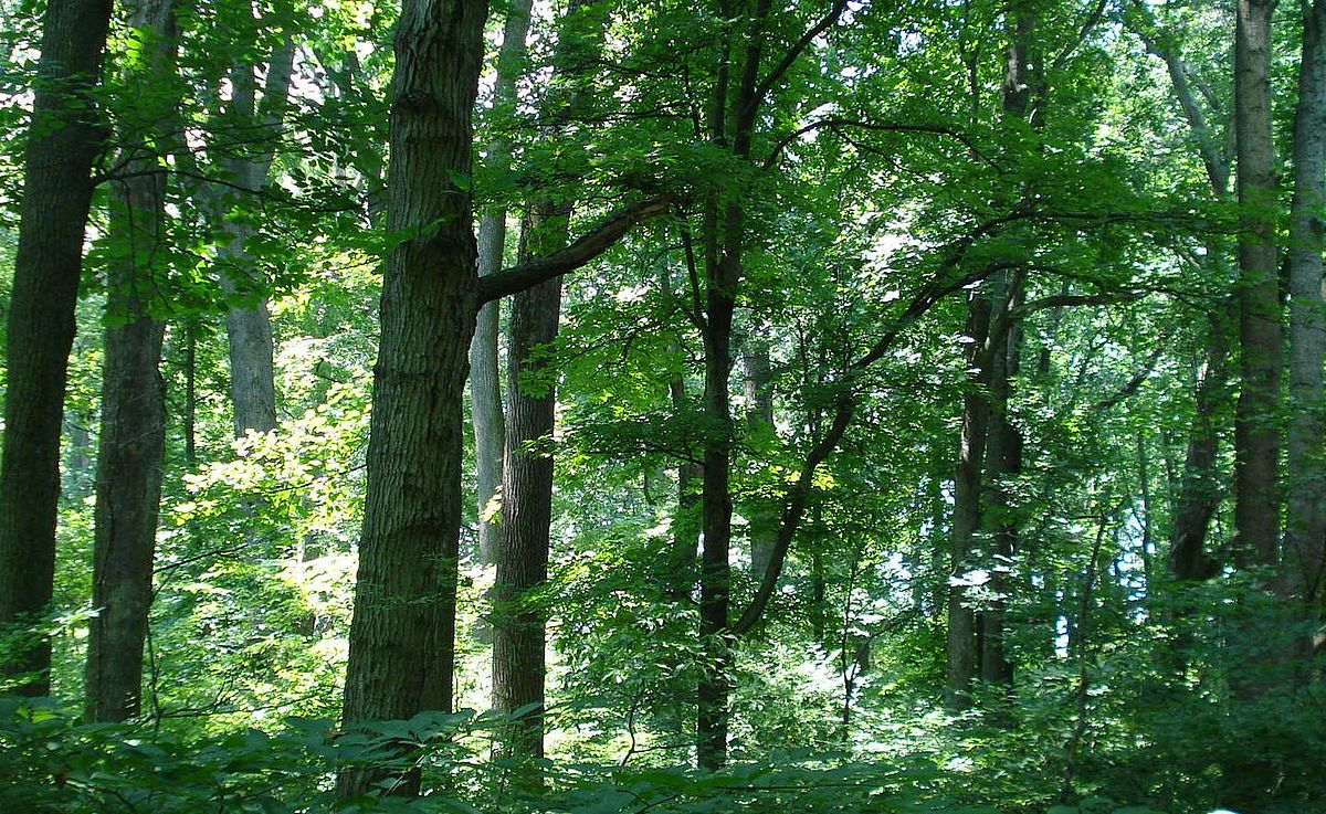 Belt Woods - Wikipedia