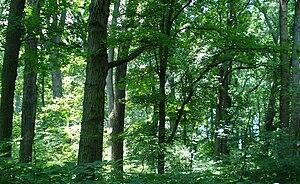 Natural Environment Area (Maryland) - Belt Woods Natural Environment Area in Prince George's County, Maryland