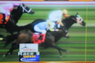 Ben's Cat - Ben's Cat winning the 2016 Jim McKay Turf Sprint in a photo finish