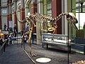 Berlín, Mitte, socha ještěra v Museum für Naturkunde.jpg