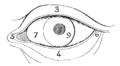 Bertillon - Identification anthropométrique (1893) 139 n&b.png
