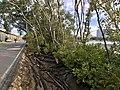 Bicentennial Bikeway along Pacific Motorway, Brisbane 01.jpg