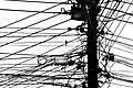 Bird In The Wire (177346399).jpeg