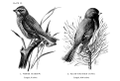 Birdcraft-0225-29.png