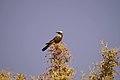 Birds africa.jpg