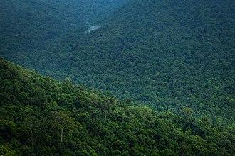 Bisle Reserve Forest - Image: Bisle Reserver Forest