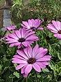 Blooming Nuwara eliya.jpg