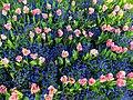 Blumenbeet - panoramio - Baden de.jpg