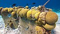 Bonaire 2014 mooring (13466180133).jpg