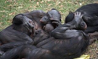 Primate sociality