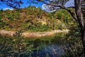 Bosco ceduo sulla riva - panoramio.jpg