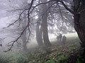 Bosque en la Sierra de las Nieves - panoramio.jpg