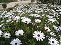 Botanical garden of Barcelona - 2004 - 10.JPG
