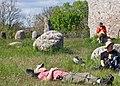 Botanister-1 - Flickr - Ragnhild & Neil Crawford.jpg