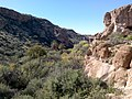Boyce Thompson Arboretum, Superior, Arizona - panoramio (20).jpg