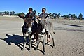 Boys on donkeys, Andriesvale, Kalahari, Northern Cape, South Africa (20532834692).jpg