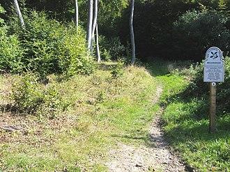 Bradenham Woods, Park Wood and The Coppice - Image: Bradenham National Trust woodland geograph.org.uk 971768
