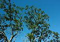 Branches (3044668308).jpg