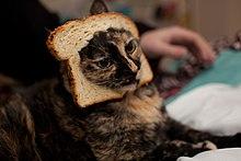 220px-Breaded_Cat.jpg