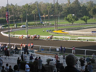 Informed Decision American Thoroughbred racehorse