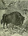 Brehm's Life of animals - a complete natural history for popular home instruction and for the use of schools. Mammalia (1896) (20227108309).jpg