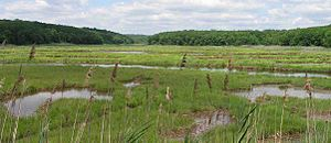 Salt marsh - An Atlantic coastal salt marsh in Connecticut.