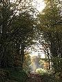 Bridleway east of Hackford Farm (3) - geograph.org.uk - 1596095.jpg