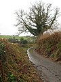 Bridleway near Hendra Bridge - geograph.org.uk - 1138404.jpg